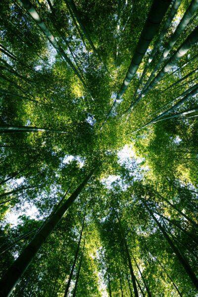 immagine-foresta